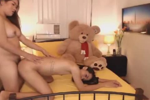 lascivious shemales wanking And engulfing penis On cam